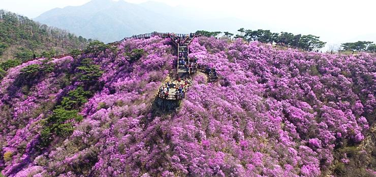 봄기운 가득한 꽃 축제 가볼까