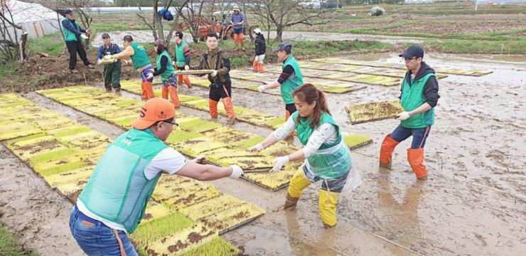 인천 서구새마을회, 모판 나르기 일손돕기