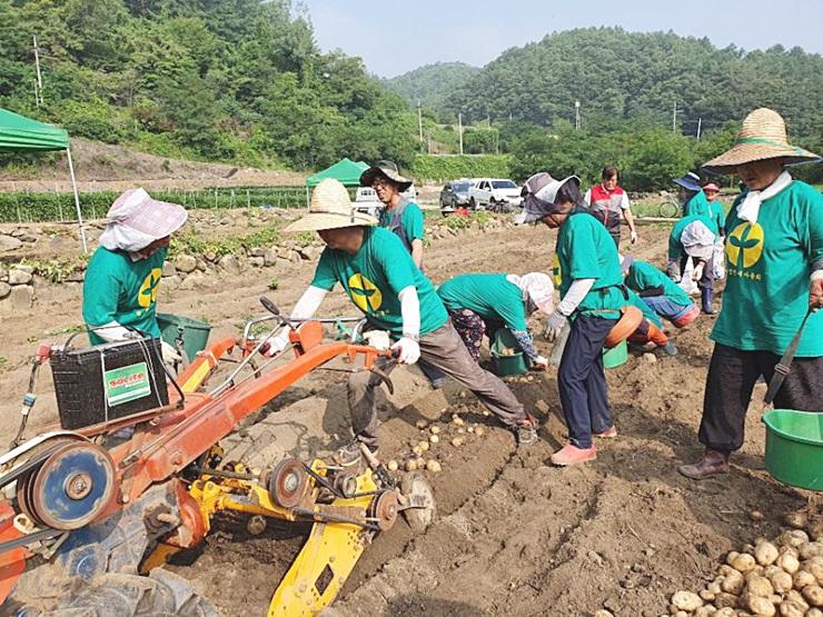 충북 단양군 적성면협의회와 부녀회, 농촌봉사활동 실시