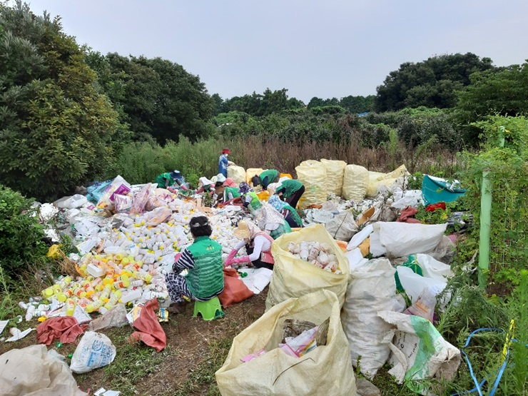 제주 서귀포시 표선면부녀회, 각종 재활용품 및 농약병 수거