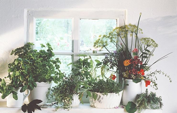 새로 또 심다, 초록식물