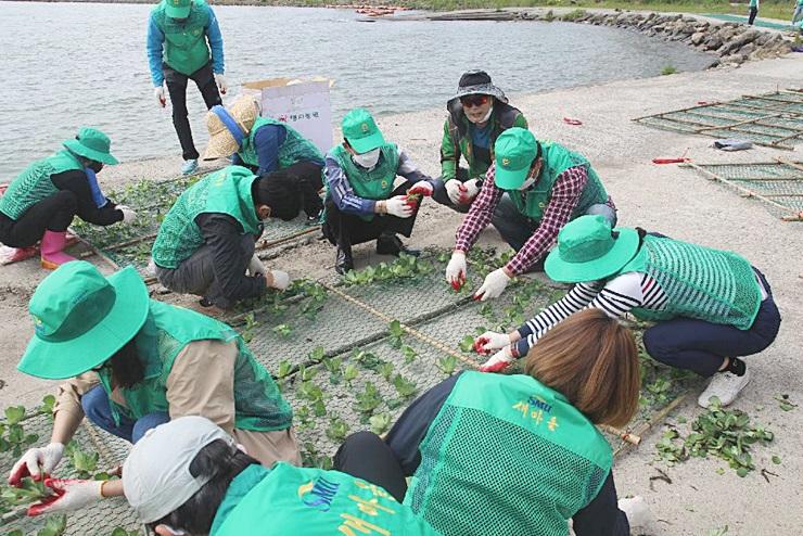 전남, 영산강 녹조저감사업 추진
