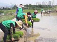 울산 북구 효문동협의회, 환경정화활동 전개