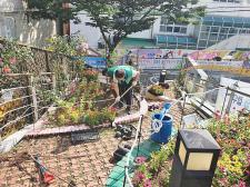 부산 중구 보수동협의회, 장미정원 화단 정비