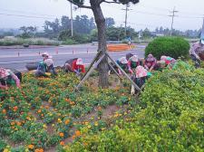 제주 서귀포시 성산읍부녀회, 꽃밭 가꾸기