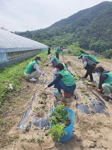 대구 남구 봉덕1동부녀회, 농촌일손돕기
