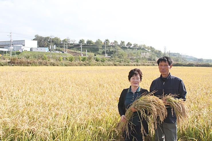 우렁이가 키운 건강한 쌀 재배